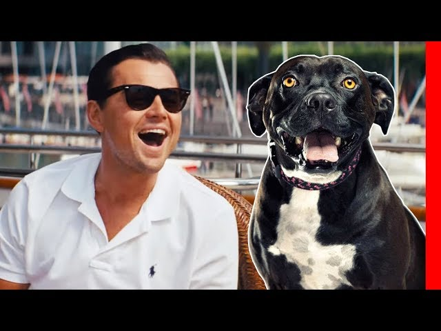 Top 10 Dog Breeds for Talkative People (Extroverts)