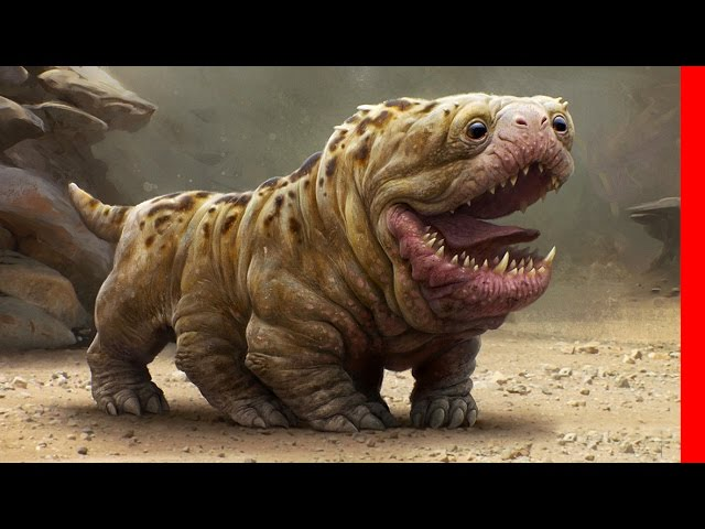 TOP 10 ALIEN LIKE DOG BREEDS