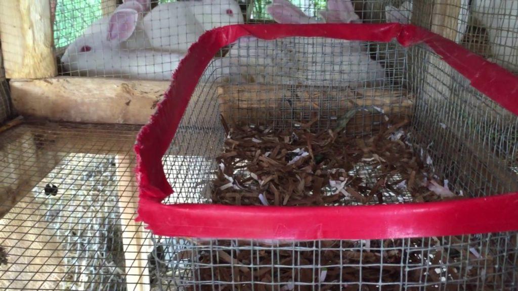 Rabbit Breeding Gone Wrong