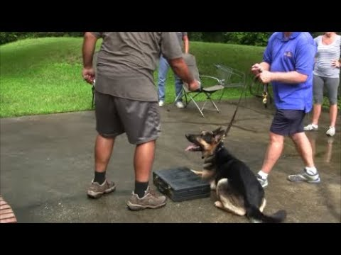 When too much force is used in Dog Training it looks like this…….