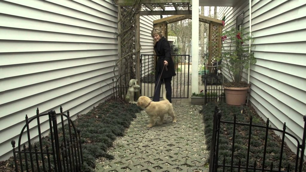 A Guide to Dog Care and Training – American Kennel Club