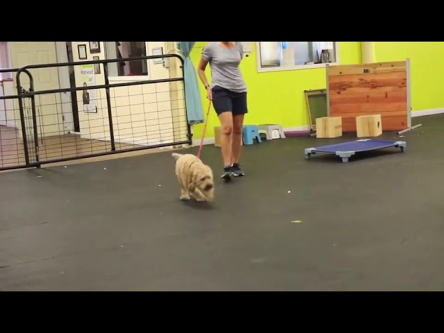 Dog Training | Dog reactivity and leash pulling | Solid K9 Training Dog Training