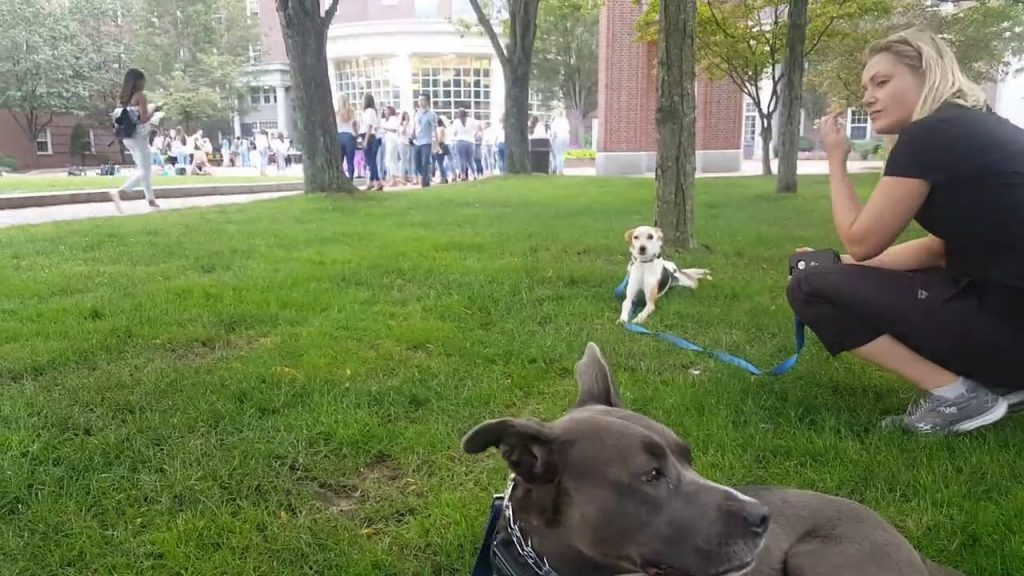 Dog Training | Dogs work on their obedience | Solid K9 Training Dog Training