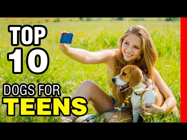 TOP 10 DOG BREEDS FOR TEENAGERS