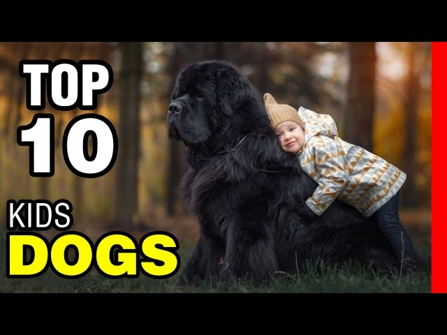 TOP 10 BEST DOG BREEDS FOR KIDS