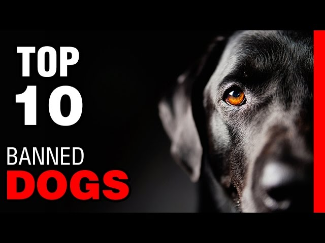 TOP 10 BANNED DOG BREEDS