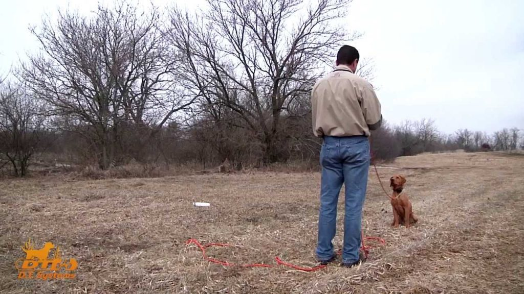 D.T. the Dog Training Video 9   How to teach Hand Signals/Casting Drills to a dog