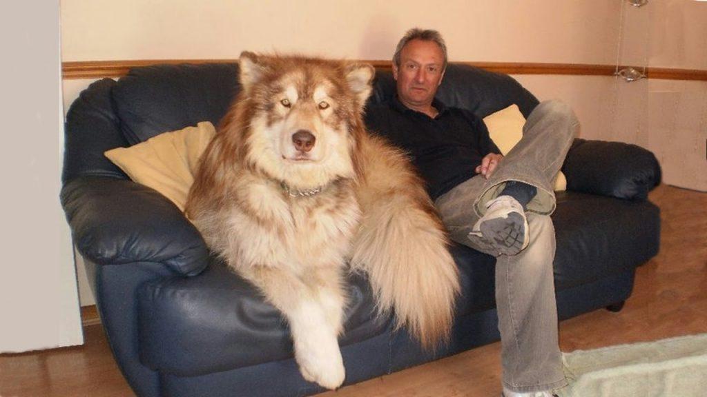 16 Top BIGGEST Dog Breeds!