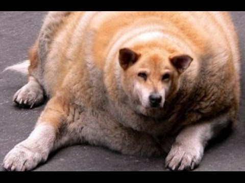 Funny Dogs Compilation ► Funny Dog Videos 2015 Try Not to Laugh, Funny Animals