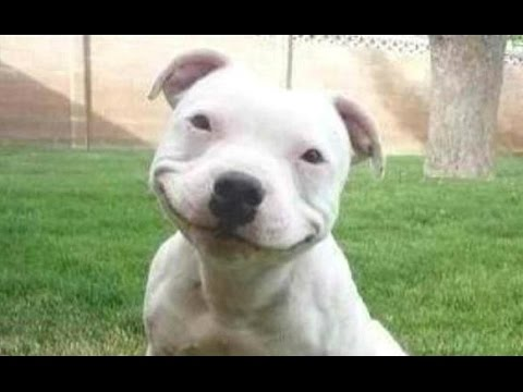 Funny Dogs – A Funny Dog Videos Compilation 2016