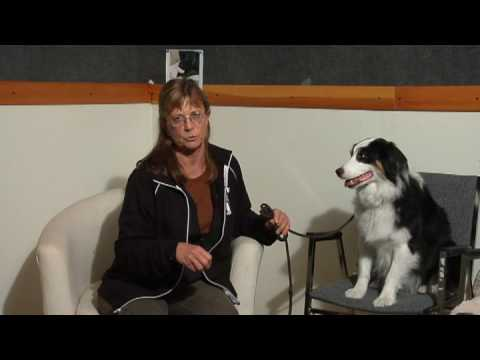 Dog Care & Training : How to Teach a Small Dog to Use a Cat Litter Pan