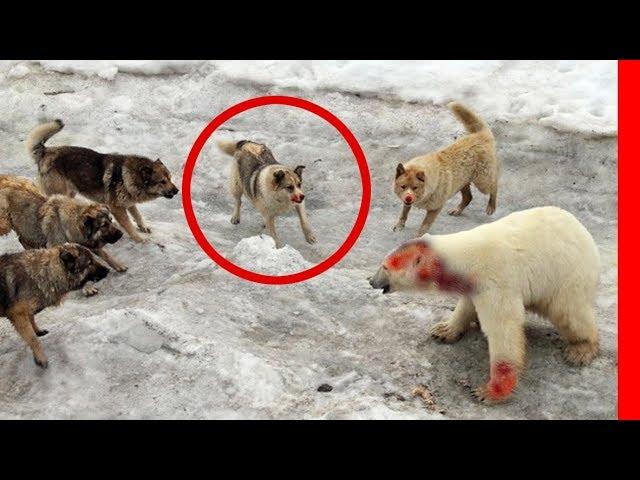 TOP 10 BADASS GUARD DOG BREEDS