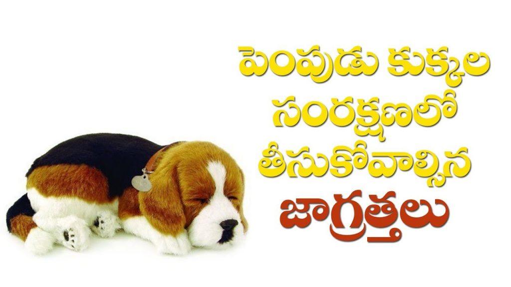 Pet Dog Care And Protect Tips | Part-1 | Pudami Putra | Raj News Telugu
