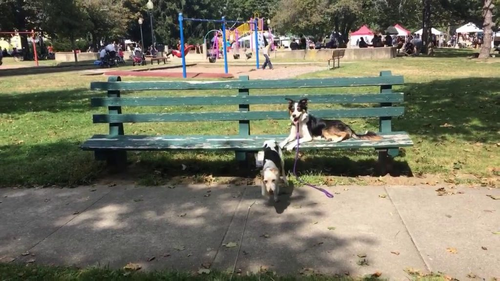 Dog Training | Practicing long line recall | Solid K9 Training Dog Training
