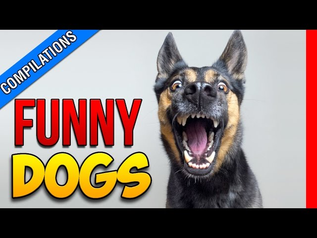 FUNNY DOGS COMPILATION – TRY NOT TO LAUGH CHALLENGE