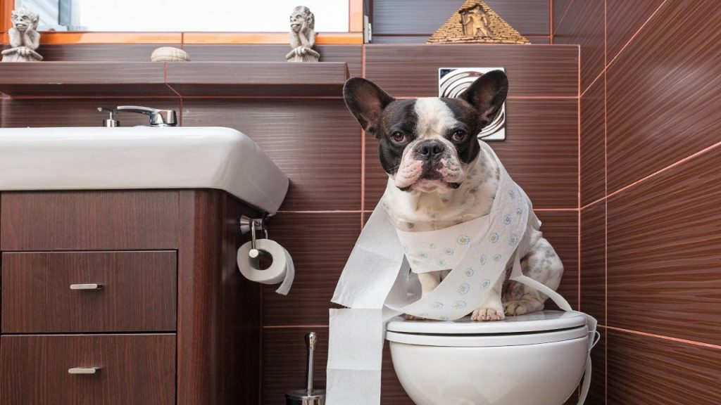 Funny Dogs Vs Toilet Paper! Hilarious Compilation!