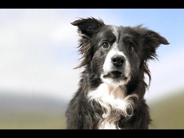Смешные собаки Приколы про собак Funny Dogs 2017 #1 (Хозяева бывают идиомами)