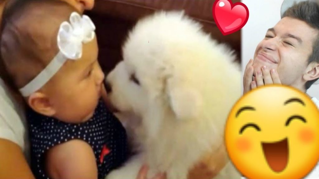 Funny Dogs Meeting Babies For The First Time!