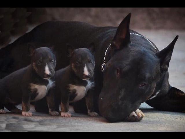 Top 10 U.K. Dog Breeds