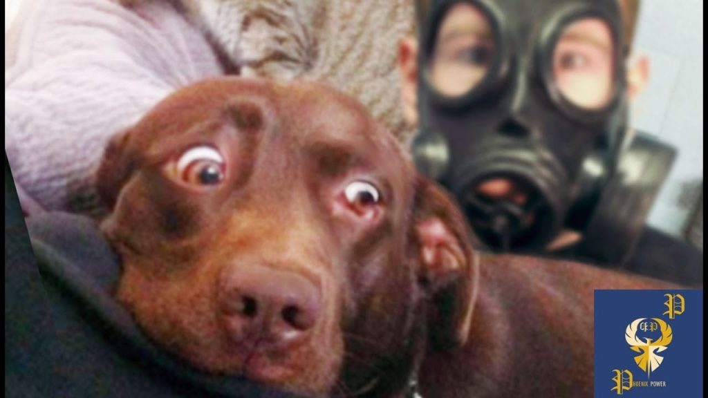 Funny Dogs Scared of Masks – Part 3