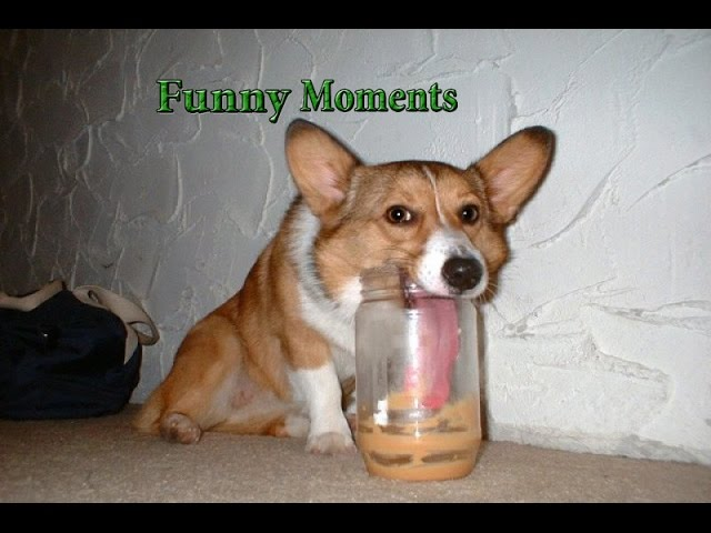 Funny Dogs Eating Peanut Butter Compilation 2015 [HD]