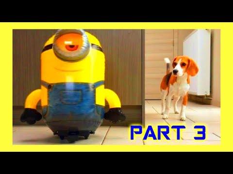 """Funny Dogs VS MINION  """"R/C STUART""""  Part 3!"""