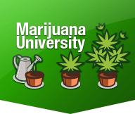 Marijuana University logo