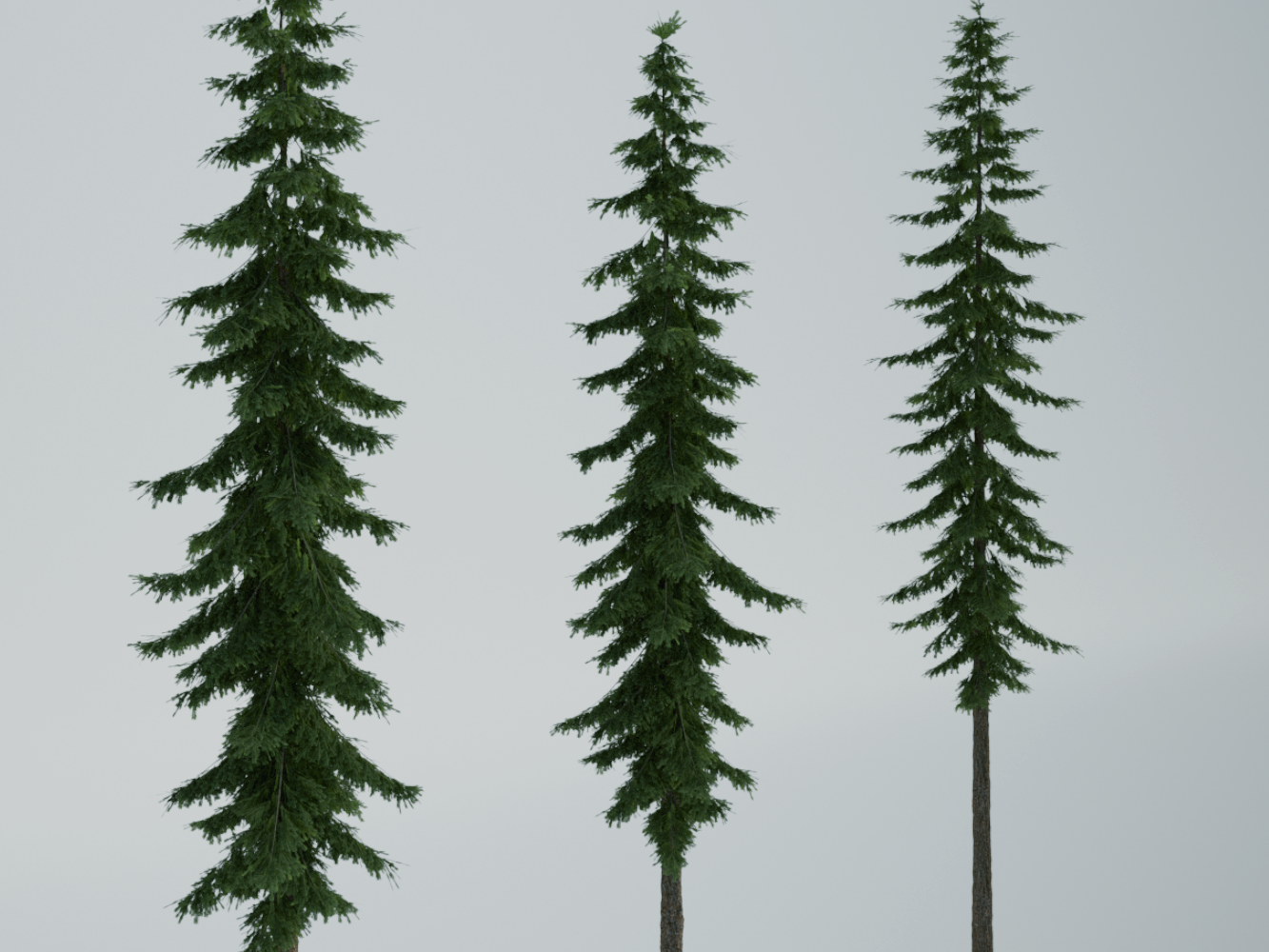 how to draw a realistic pine tree