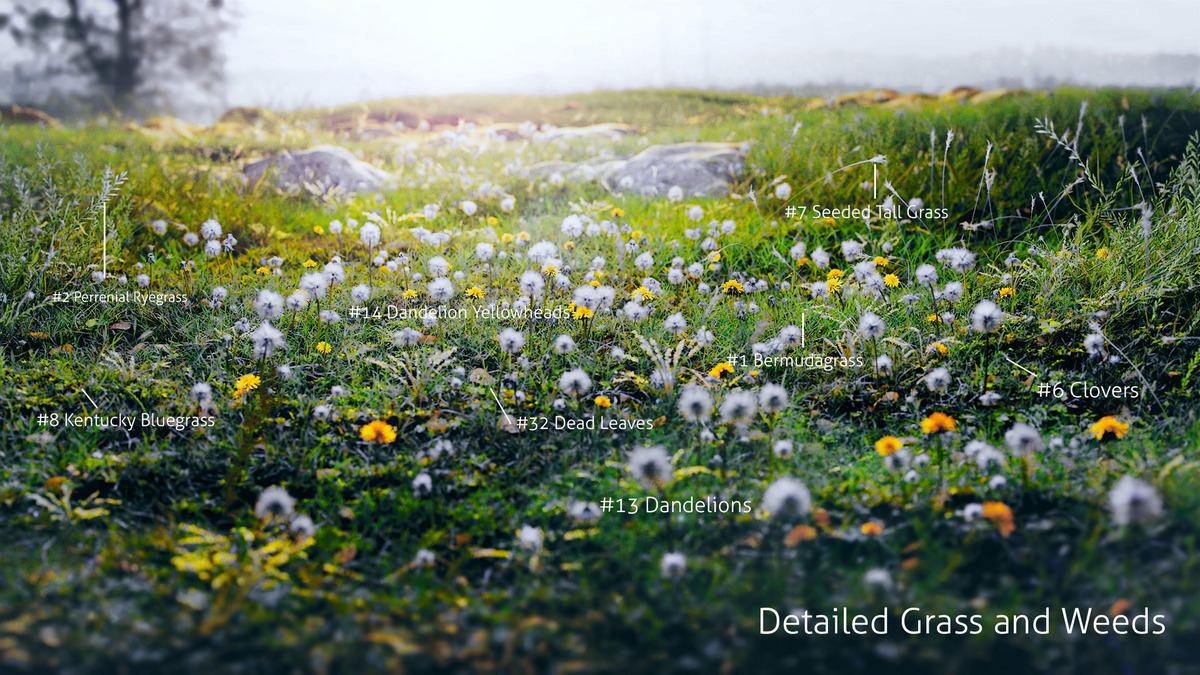 Dandelions_Labelled