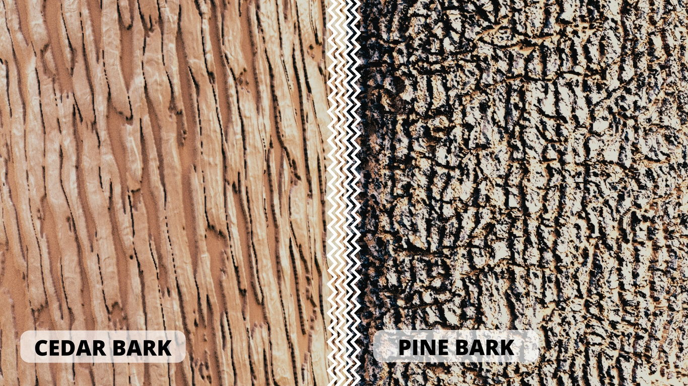 Tree Bark Shaders: Cedar and Pine