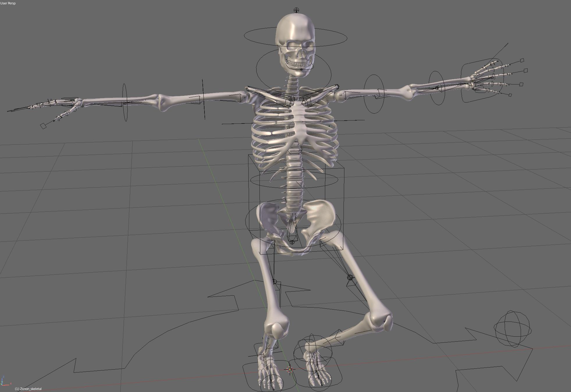Anatomically based human skeleton XMS - Blender MarketAnatomically ...