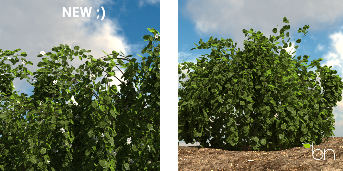 BN-combined shrub Update 1.2 -6
