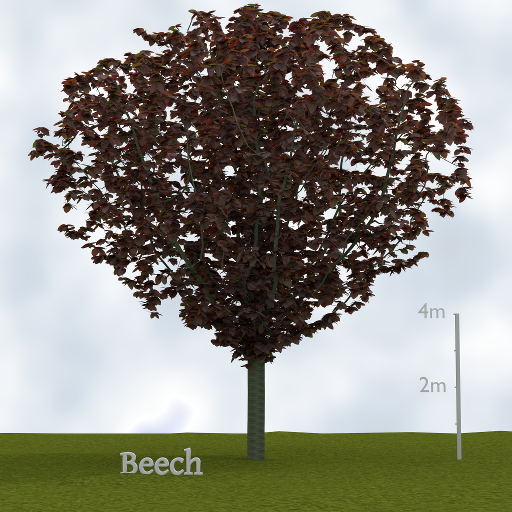 beach_tree.png