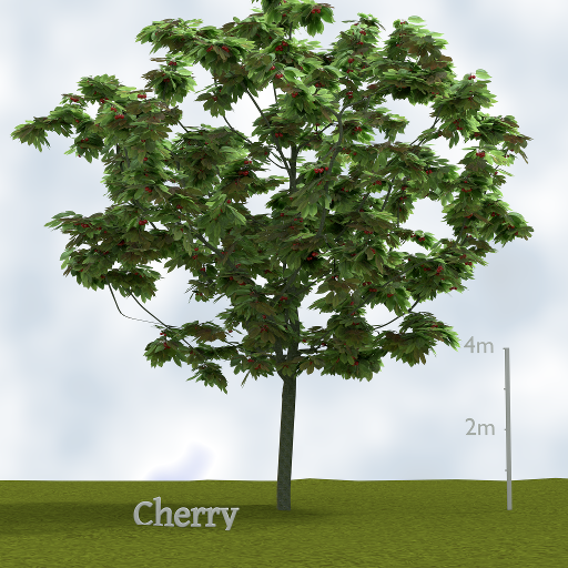 cherry_tree.png