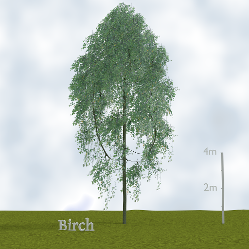birch_tree.png