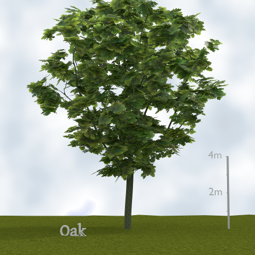 oak_tree.png