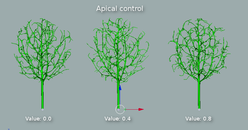 Trunk and branches apical control.png