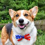 @yoda_th3corgi's Profile Picture