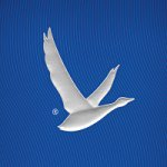 @greygoose's profile picture