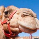 @ausoutbacknt's Profile Picture