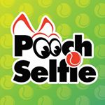 @poochselfie's Profile Picture