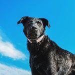 @knoxandbear's Profile Picture