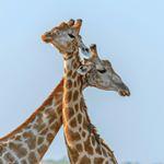 @wildlife_supreme's Profile Picture