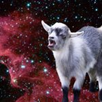 @outerspaceanimals's Profile Picture