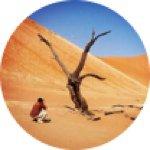 @africatracks's Profile Picture