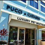 @pucciandcatana's Profile Picture