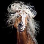 @spanishvision's Profile Picture