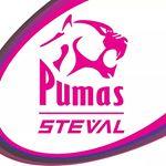 @stevalpumas's Profile Picture