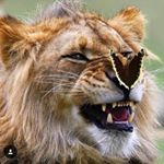 @wildlifeowners's Profile Picture