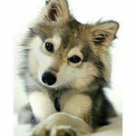 @wildbabyshow's Profile Picture